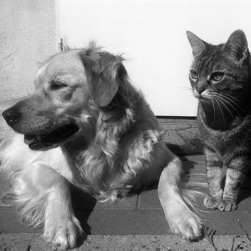 Tierschutz und Tierhalterrecht